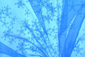 Floral organza as abstract wave background — Stock Photo