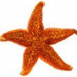 Stock Photo: Red starfish close up