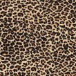 Foto Stock: Leopard skin as background