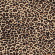 Leopard skin as background — Stock Photo