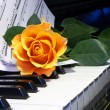 Stock Photo: Rose on musical note