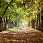 Park landscape in autumn — Stock Photo #3373261