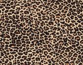 Piel de leopardo como telón de fondo — Foto de Stock