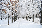 Park krajina v zimě — Stock fotografie