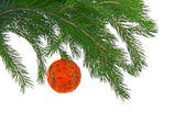 Christmas tree- fir with sphere — Stock Photo