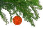 Julgran-fir med sfär — Stockfoto