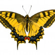 Stock Photo: Butterfly isolated