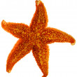 Stock Photo: Starfish isolated