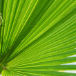 Stock Photo: Leaf of palm