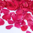 Stock Photo: Petals of roses as background