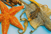 Droge zee dier als madicine — Stockfoto
