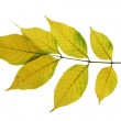 Autumn leaf of maple — Stock Photo