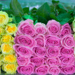 Roses as background — Foto Stock