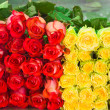 Roses as background — Foto de Stock