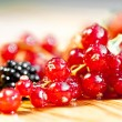 Currants - Stockfoto