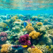 Tropical Coral Reef. Red sea — Stock Photo #3570000