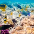 Tropical Coral Reef. Red sea - Foto de Stock