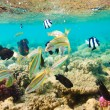 Tropical Coral Reef. Red sea - Stock Photo