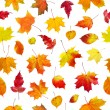 Seamless autumn leaves on a white background - Stock Photo