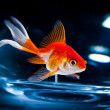 Goldfish — Stock Photo #3858335