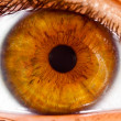 Stock Photo: Human eye close up ...