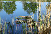Broken wooden bridge in a small pond — Stock Photo