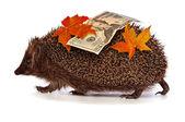 Hedgehog with dollars profit — Stock Photo