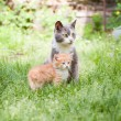 Two cats - Foto de Stock