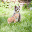 Two cats — Stockfoto