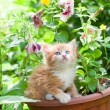 Kitten — Stock Photo #4452280