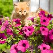 Two young cat between flowers - Stock Photo