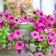 Two young cat between flowers - Foto Stock