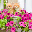 Two young cat between flowers — Stock Photo #4452319
