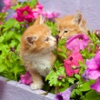 Two young cat between flowers — Stock Photo #4452325
