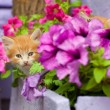 Two young cat between flowers - Photo
