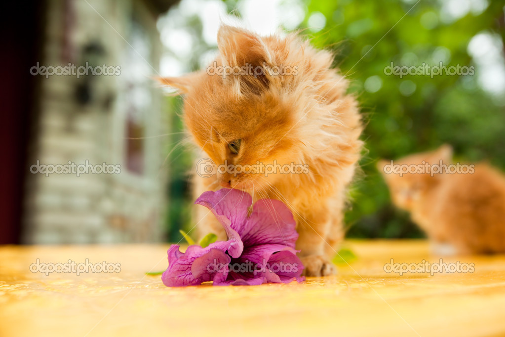 Two young cat between flowers — Stock Photo #4452341