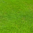 Close-up image of fresh spring green grass - ストック写真