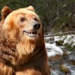 Head of brown bear close up against taiga - Stock Photo