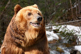 Head of brown bear close up against taiga — Stock Photo