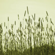 Background from green grass — Stock Photo