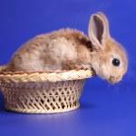 decoratieve rode cub voor een konijn — Stockfoto