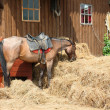 Red horse eats hay - Stock Photo