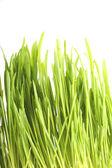 Giovane erba verde — Foto Stock