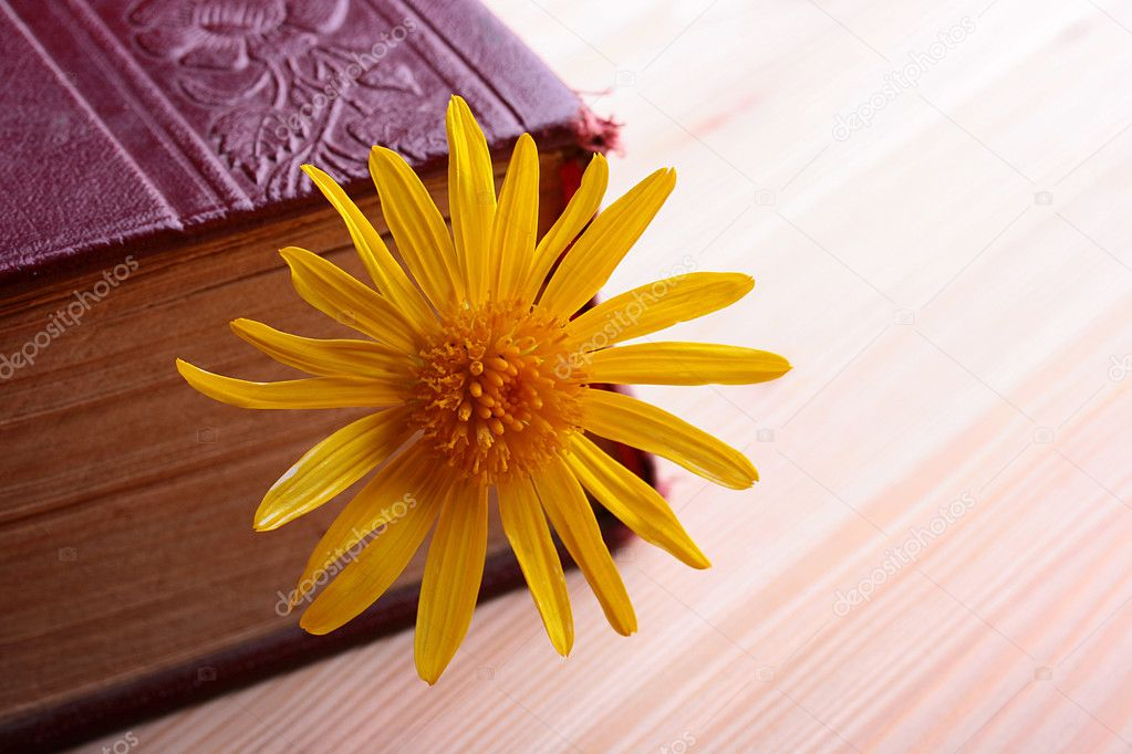 The old book on a wooden table, as a bookmark a yellow flower.  Stock Photo #2904734