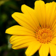 Yellow flower — Stock Photo #3146697
