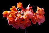 Ornamental plant — Foto Stock