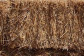 Hay background — Stock Photo