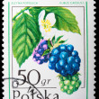 Royalty-Free Stock Photo: Poland - CIRCA 1974: A stamp Dewberry