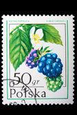 Poland - CIRCA 1974: A stamp Dewberry — Stock Photo