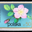 Royalty-Free Stock Photo: Poland - CIRCA 1974: A stamp Alpine rose